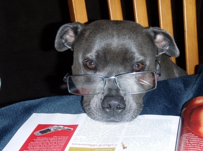 dog reading, books